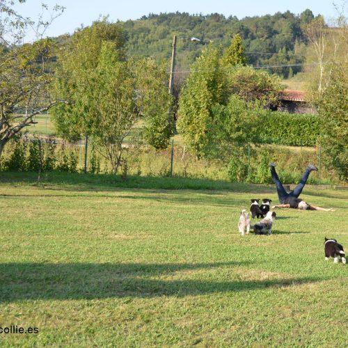 Zona para cachorros