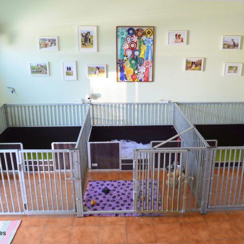 Estancia para madres y cachorros